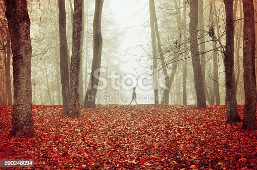 Autumn nature -foggy autumn view with autumn park in dense fog with ghostly silhouette- autumn landscape with autumn trees and red dry fallen leaves. Autumn park in dense autumn fog. Soft focus applied.