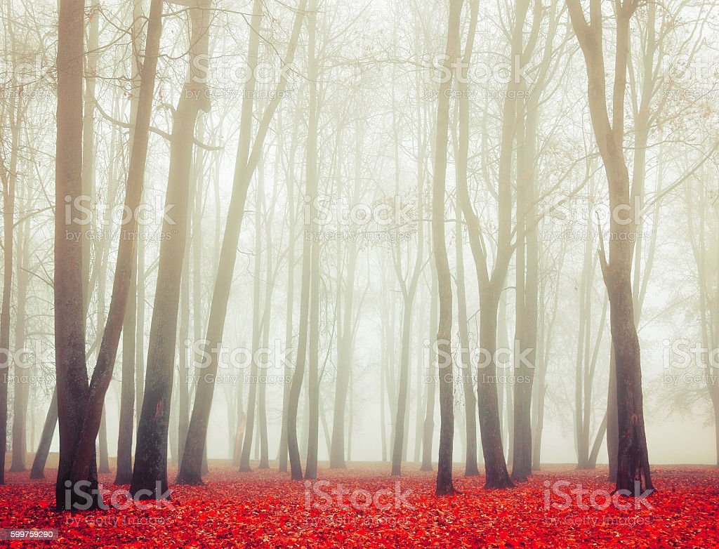 Autumn nature. Autumn landscape with autumn trees and red dry fallen...