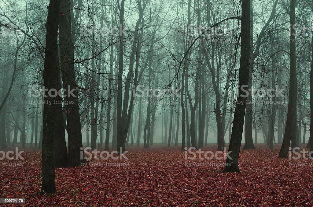 Autumn park in foggy weather - mysterious autumn landscape stock photo