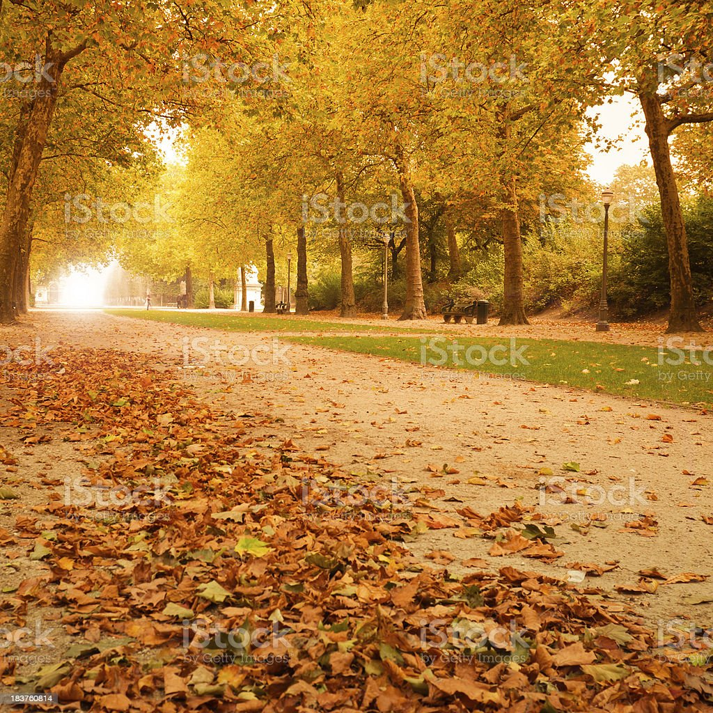 Autumn park in november - Light on background royalty-free stock photo