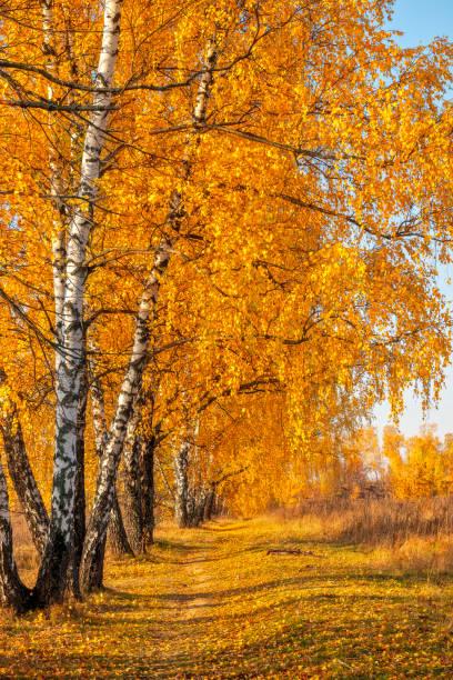 Autumn park in warm sunny day stock photo