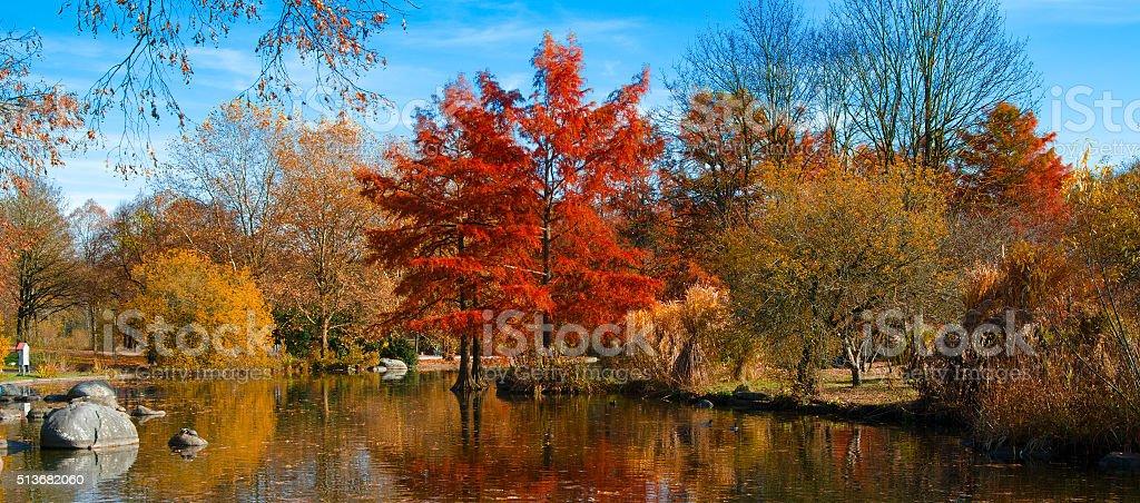 Autumn Park landscape stock photo