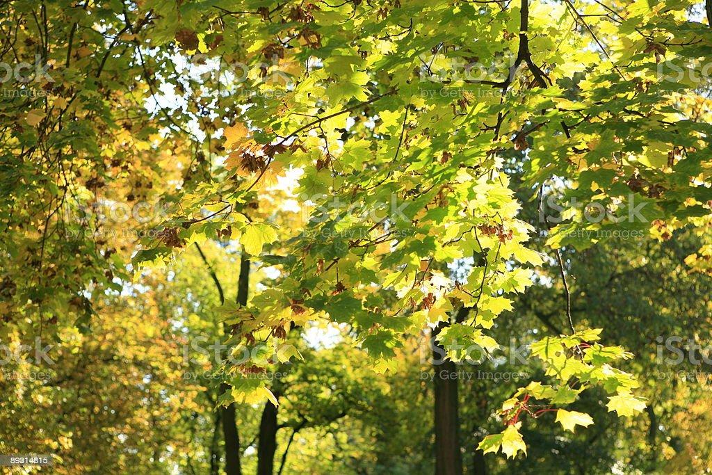 autumn park landscape royalty-free stock photo