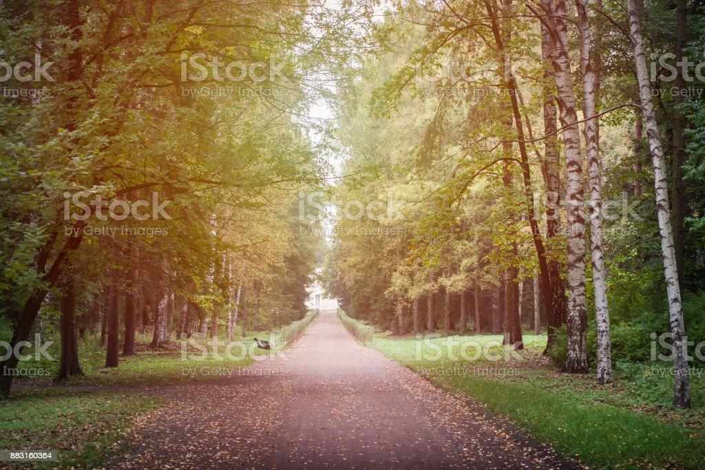 Autumn park lanscape background. stock photo