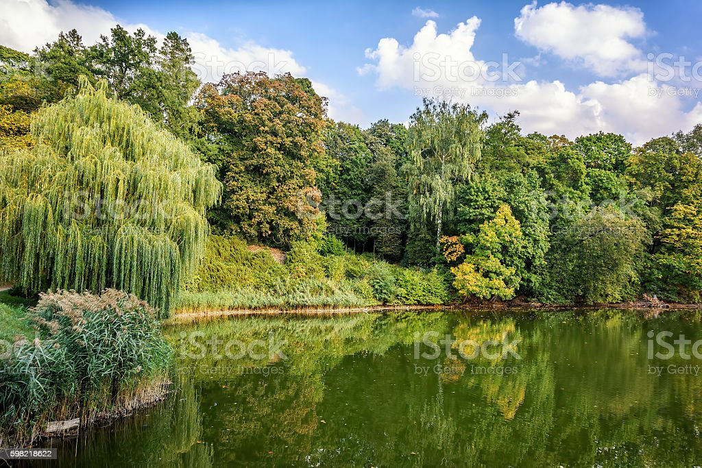 Autumn park.  Leaf fall. Lake. foto royalty-free