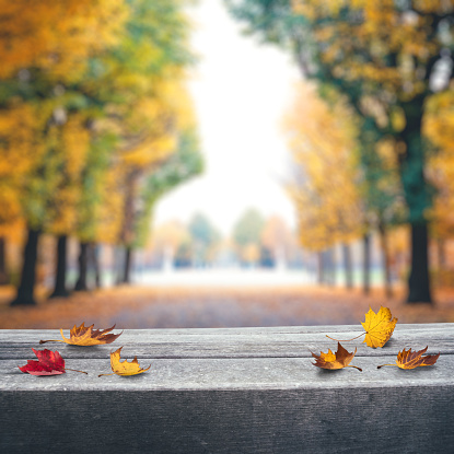 a red maple leaf lies on a wooden bench in autumn view top