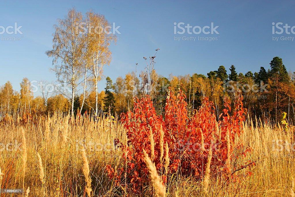 Autumn park. royalty-free stock photo