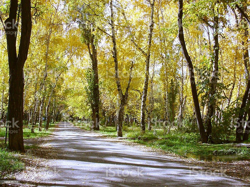 Parc automne photo libre de droits
