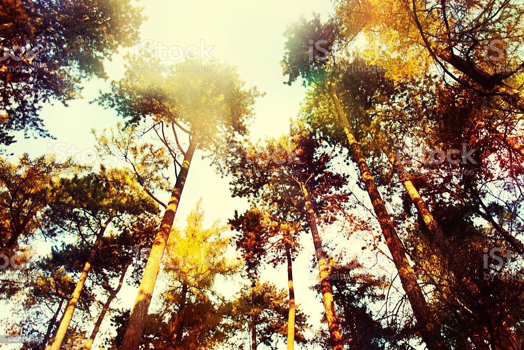 Autumn park. stock photo
