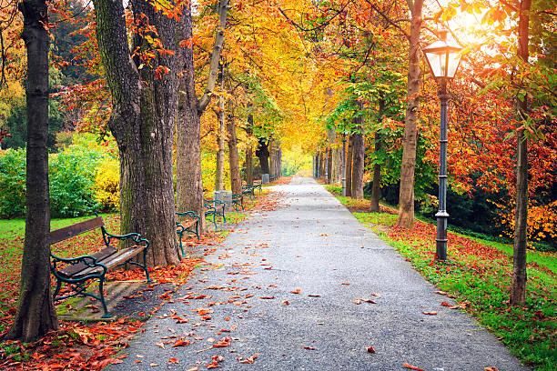 Parc automne - Photo