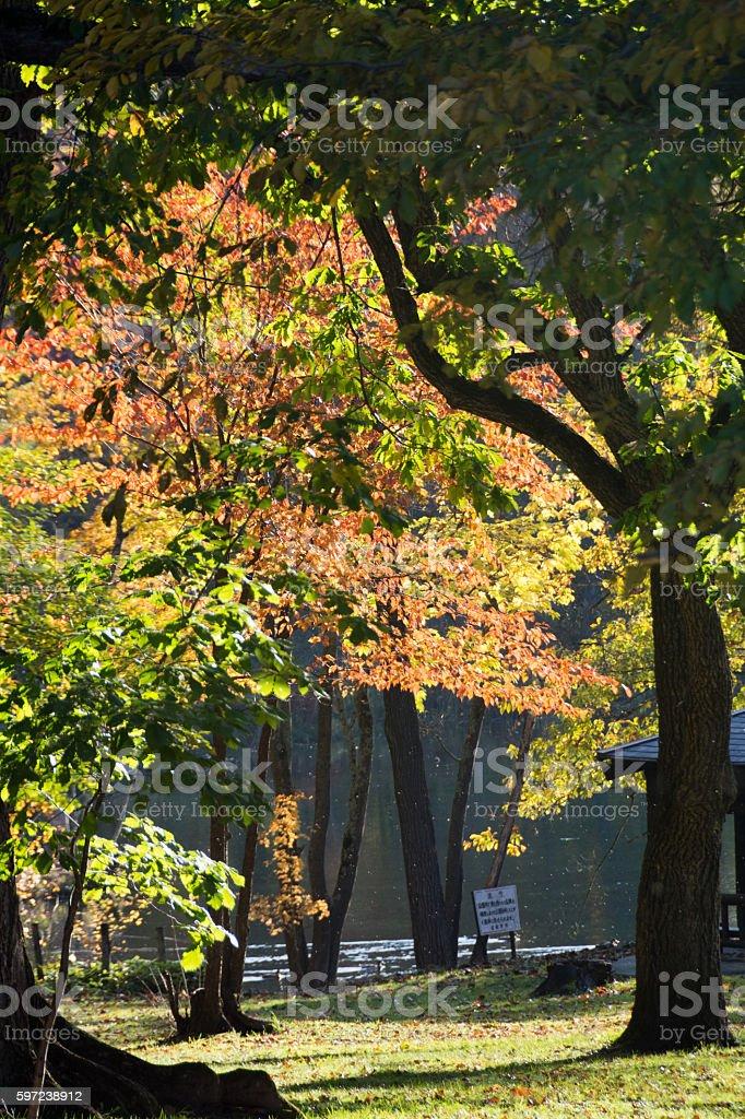 秋の公園 ロイヤリティフリーストックフォト