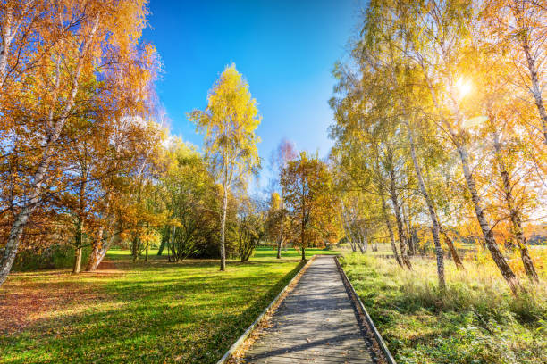 Autumn park with colorful trees, falling leaves on a sunny day. stock photo