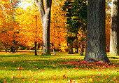 Autumn park with red fallen leaves