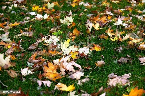 istock Autumn Patern 1027524644