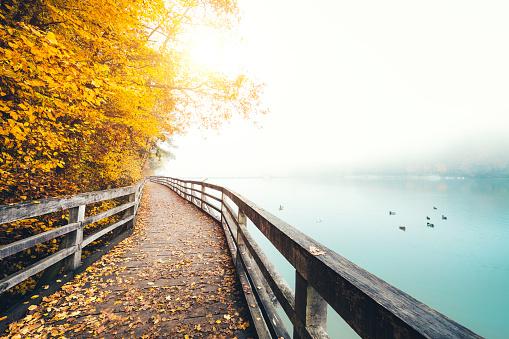 Autumn Path Along The Lake
