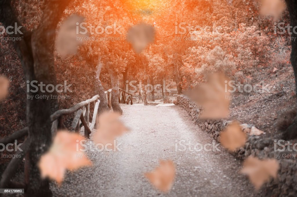 Autumn path and maple leaves royalty-free stock photo