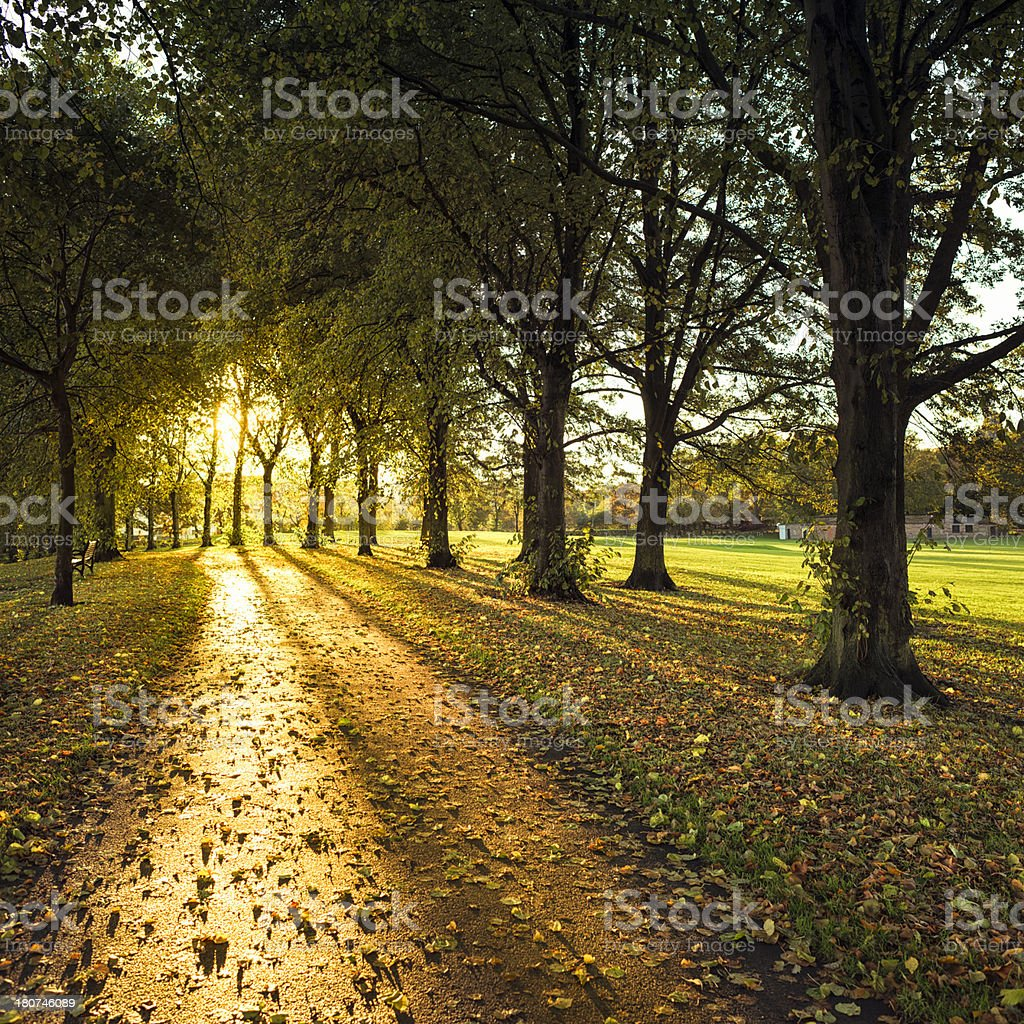 Autumn Path at Sunset stock photo