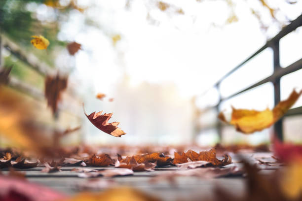 Autumn Path Full Of Leaves stock photo