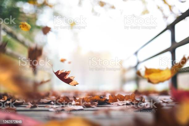 Photo of Autumn Path Full Of Leaves