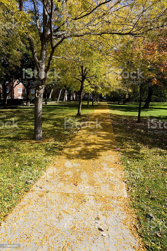 Autumn Path in Chicago Park royalty-free stock photo
