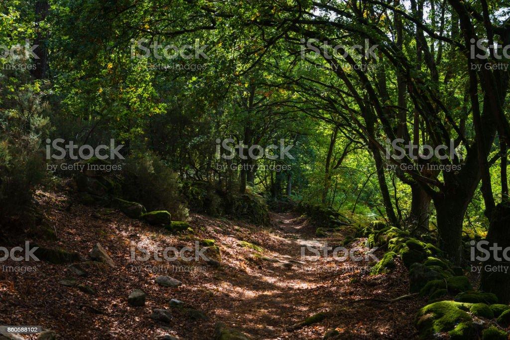 Autumn path in Galicia stock photo