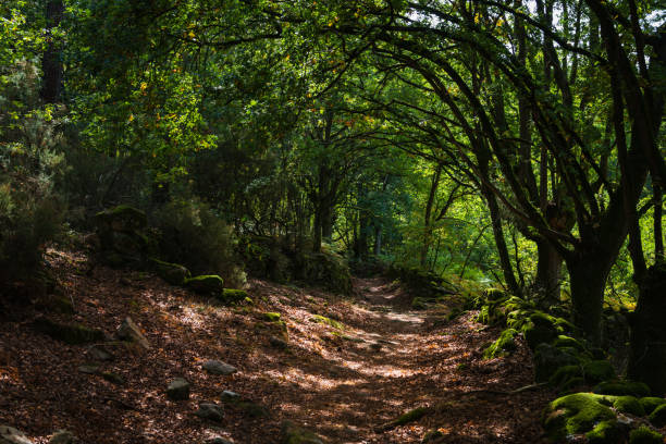 Autumn path in Galicia Path winding through a forest in autumn in Galicia, Spain galicia stock pictures, royalty-free photos & images