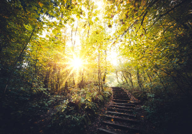 autumn path in the forest - spirituality stock photos and pictures
