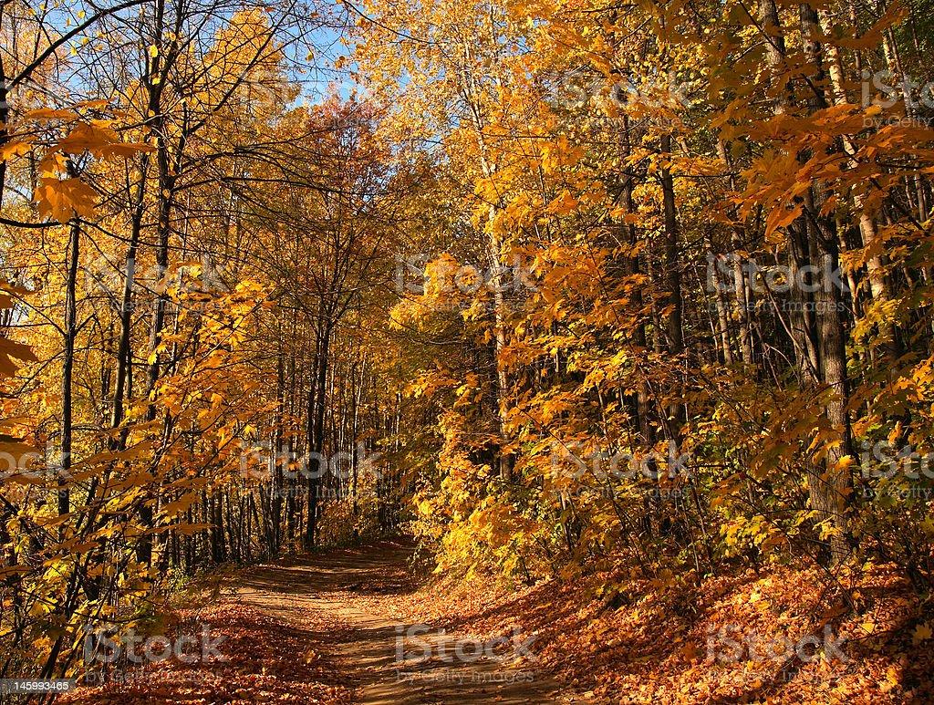 Autumn path in wood. stock photo