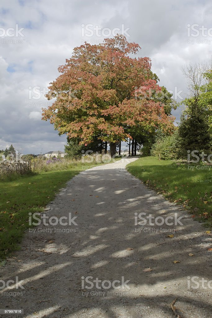Autumn path royalty-free stock photo