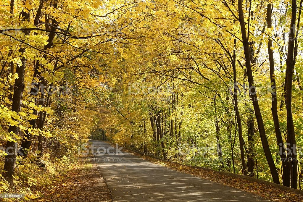 Autumn path through the forest royalty-free stock photo