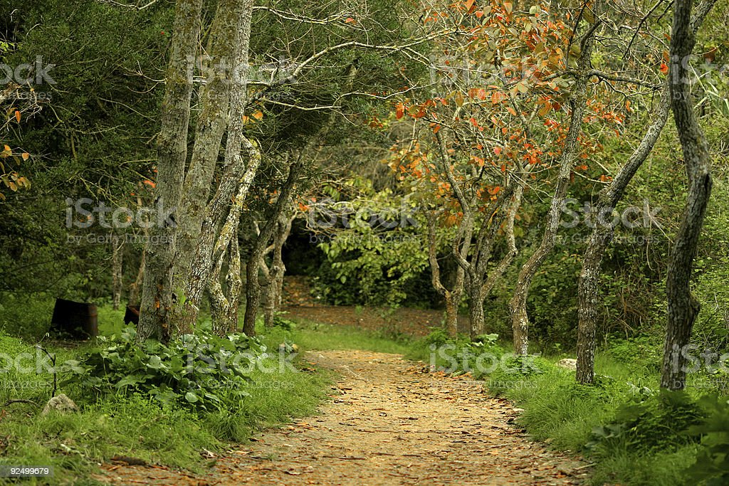 Autumn Pathway royalty-free stock photo