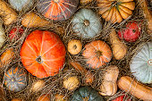 autumn pattern many pumpkins set vegetable multicolored rustic design base