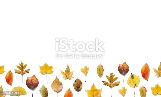 Autumn background with colorful (maple, birch, linden, ginkgo) leaves on white background.