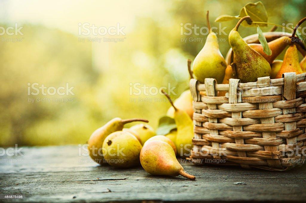 Autumn pears stok fotoğrafı