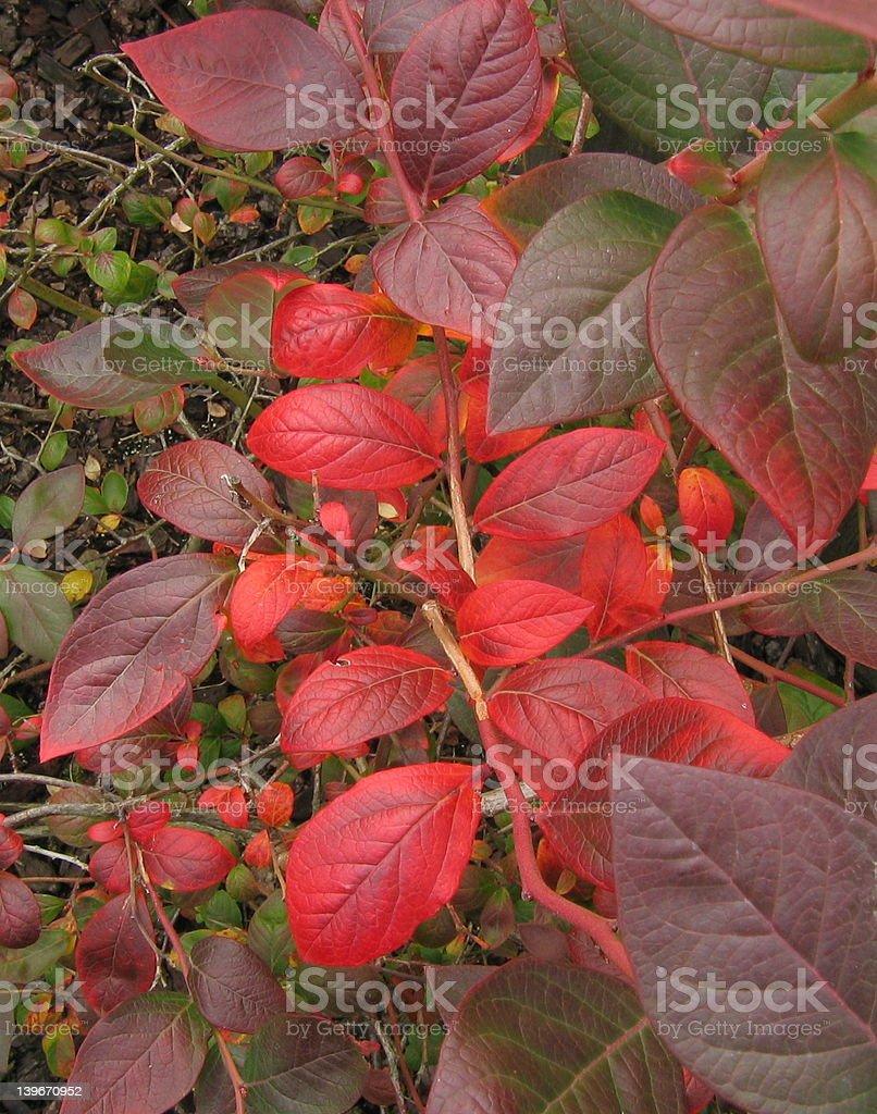 Autumn Perspective stock photo