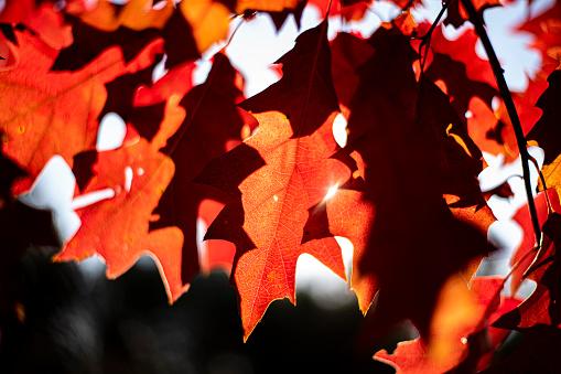 autumn photos, autumn backgrounds for social media