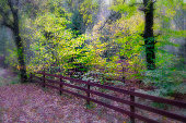 Vibrant autumn trees behind an old weathered wooden fence, dreamy feeling process