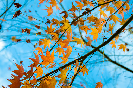 Autumn Stock Photo - Download Image Now