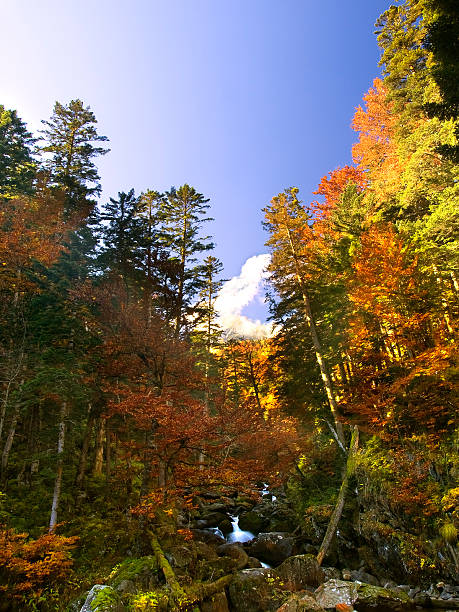 осень - лерида стоковые фото и изображения