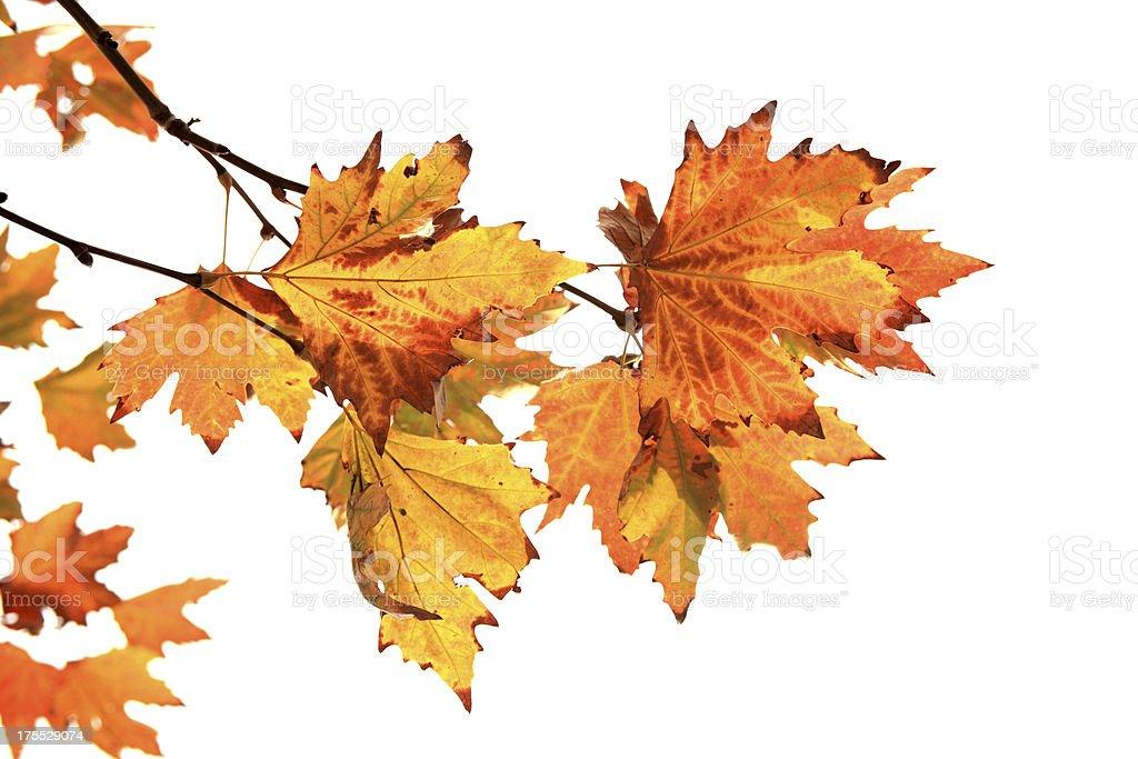 L'automne - Photo