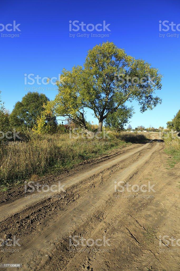 Золотая осень. autumn stock photo