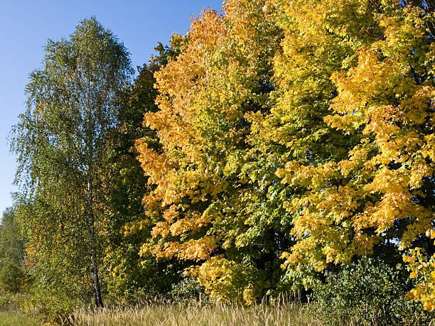 Cтоковое фото Осень