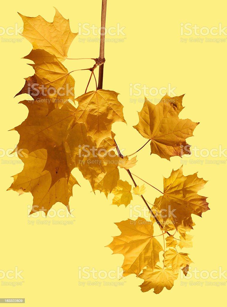 Den Herbst – Foto