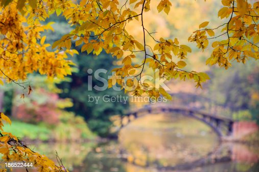 Autumn Stock Photo & More Pictures of Autumn