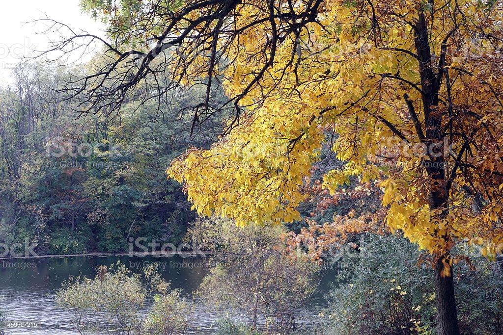Autumn royalty-free stock photo