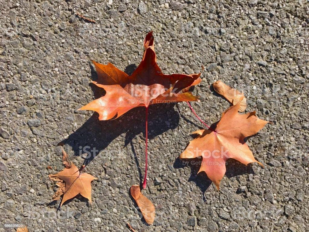 Autumn zbiór zdjęć royalty-free
