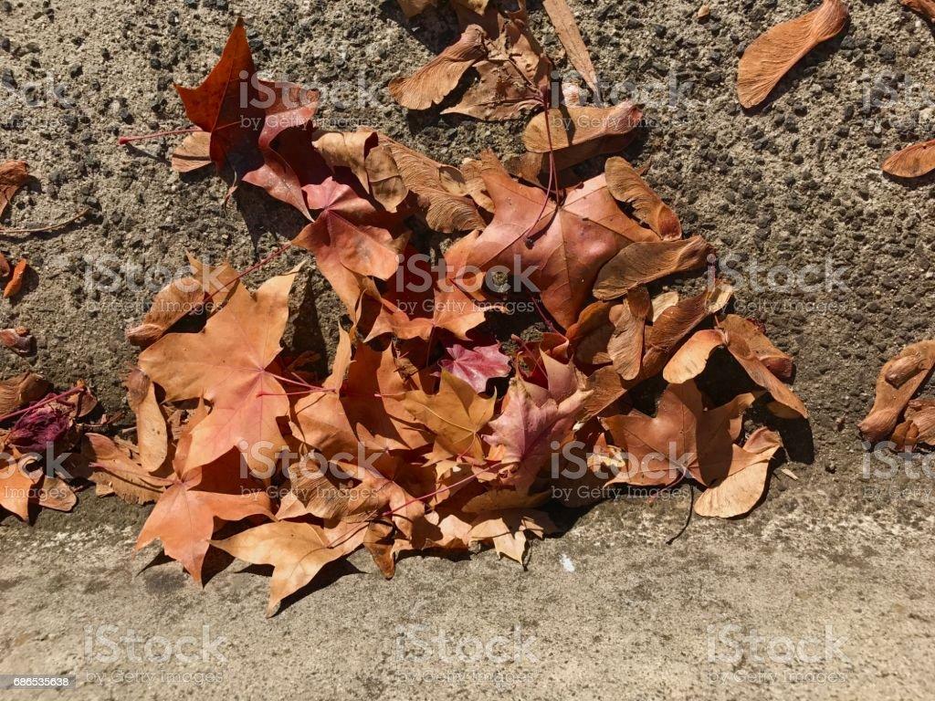 Autumn royaltyfri bildbanksbilder