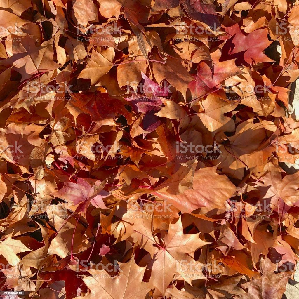 Autumn foto stock royalty-free