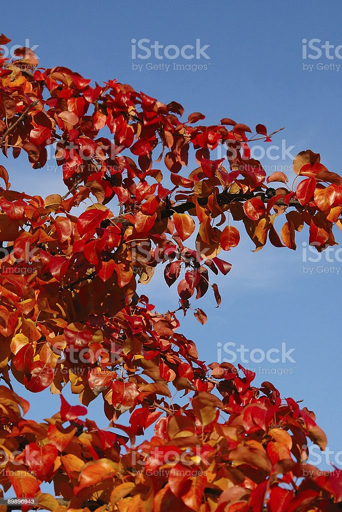 Autumn. royalty-free stock photo