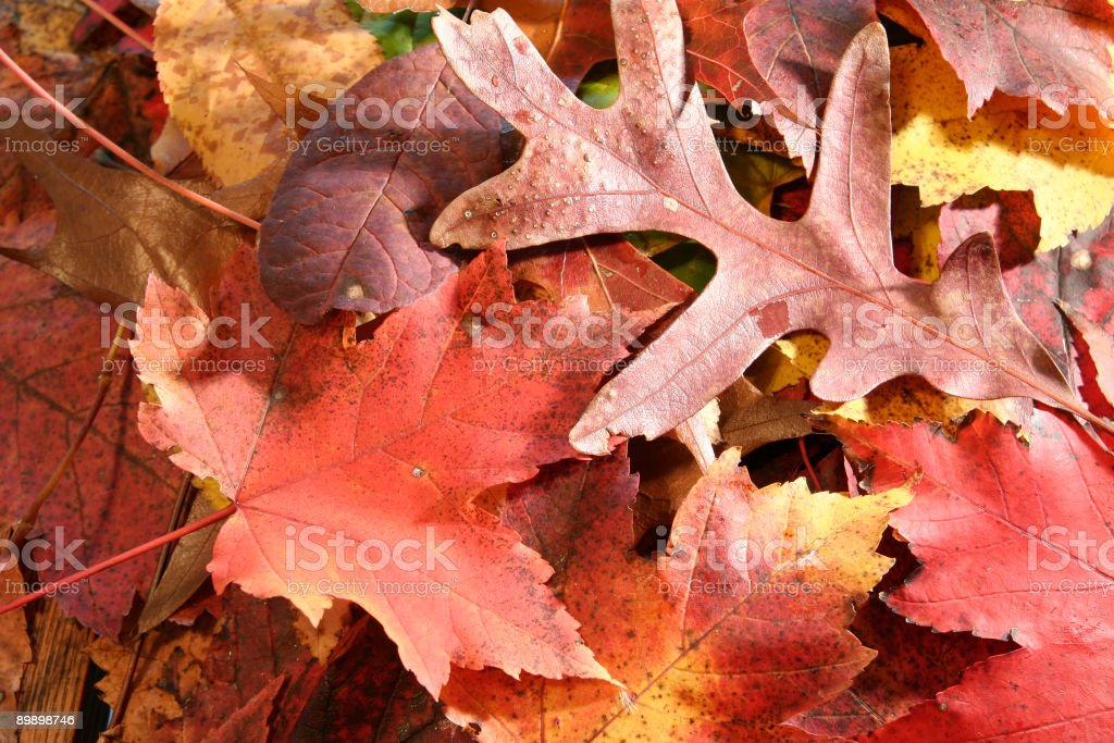Autunno foto stock royalty-free